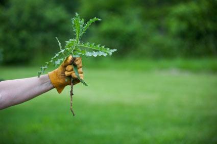 Garden-weeds