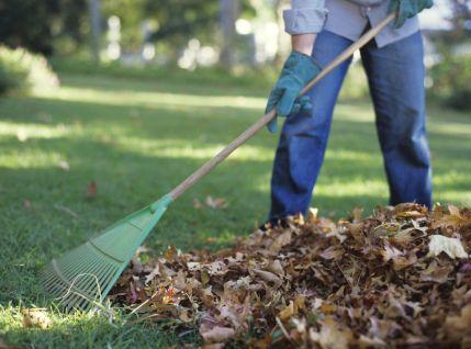 Ne-jetez-plus-vos-feuilles-mortes_exact1024x768_l