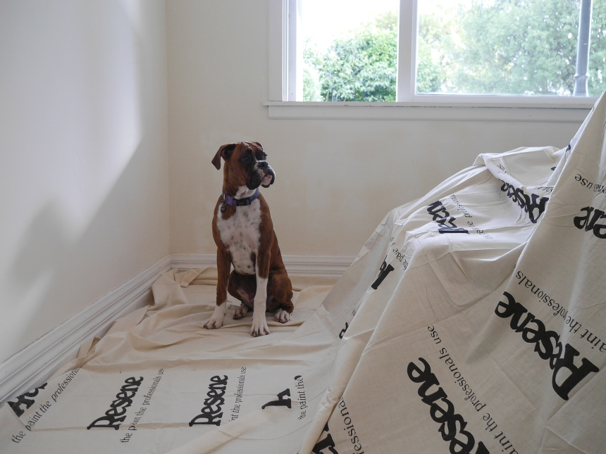 Pets in renovation